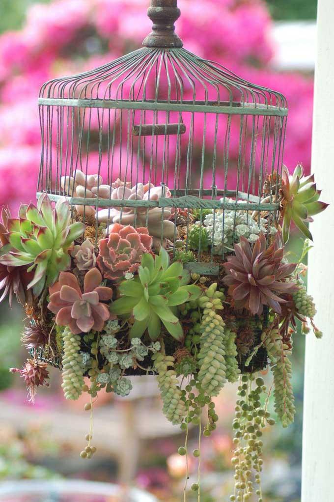 cage-choux-pinterest