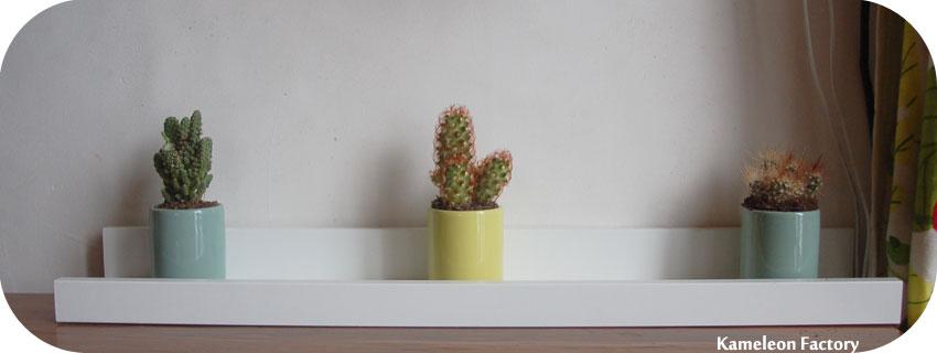 étagère pour 3 cactus en tasse à café