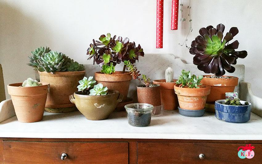 nursery-succulente-3