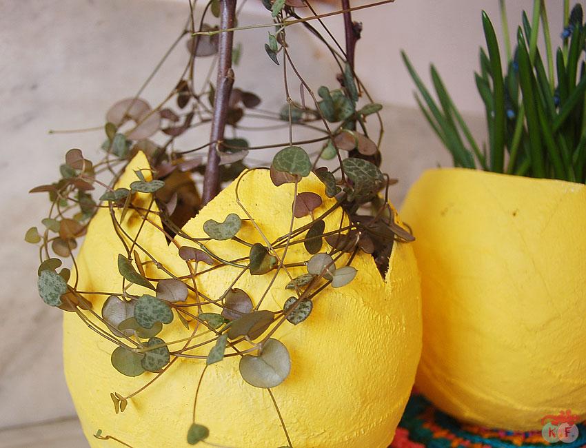 insîration végétale et plâtre