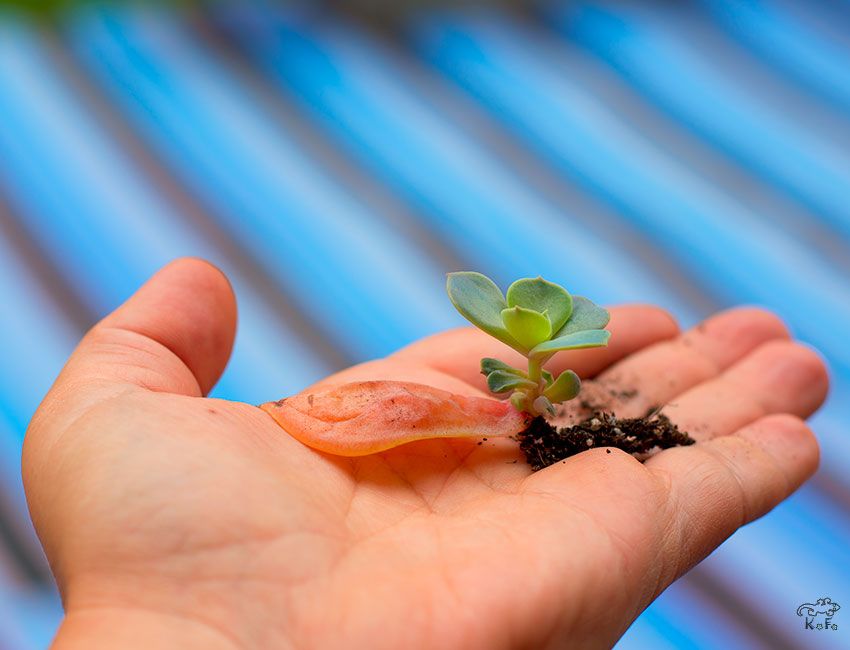La nature est SUCCULENTE! DIY plateau de bouturage