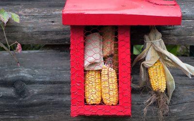 Fabriquez une mangeoire à cuicui, à table les oiseaux!!!