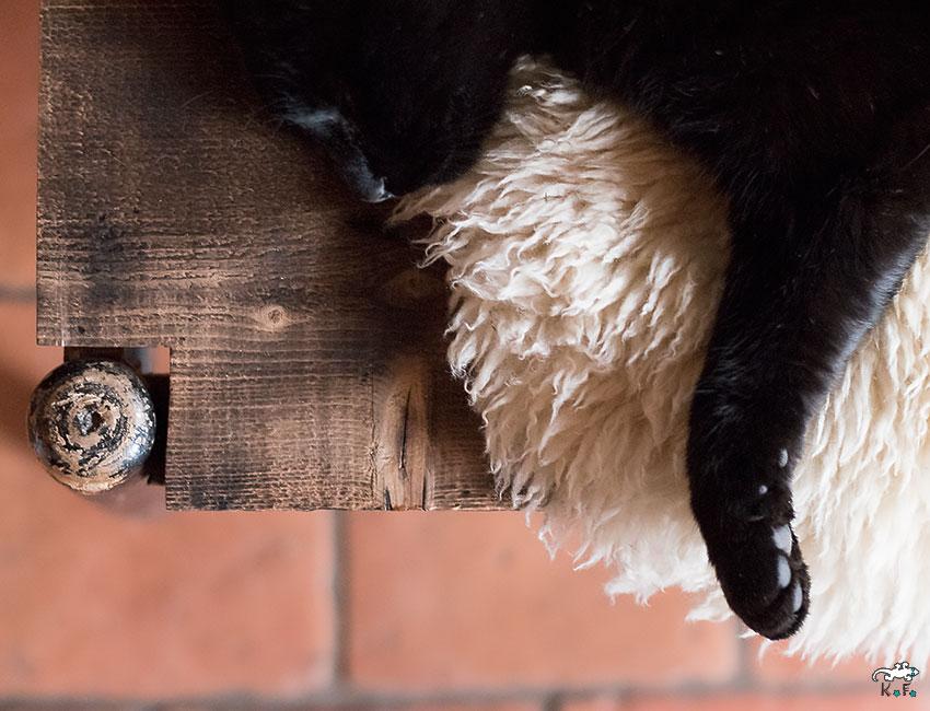 effet shou-sugi-ban sur banc et chat