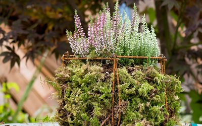 Du treillis métallique pour les jardinières d'automne