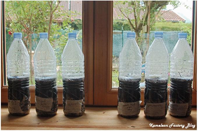 aire des semis autonome dans des bouteilles en plastique