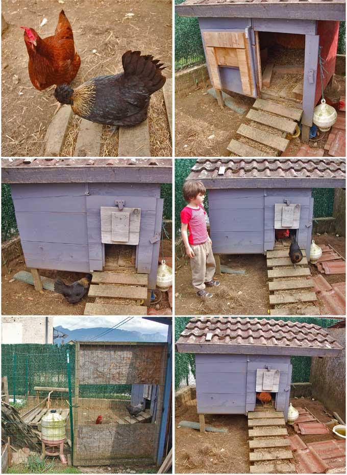 Poulailler fait maison