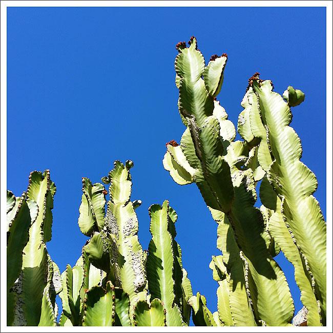 cactus-ibiza