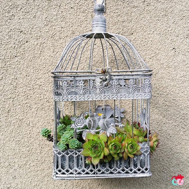 cage de décoration pour plantation