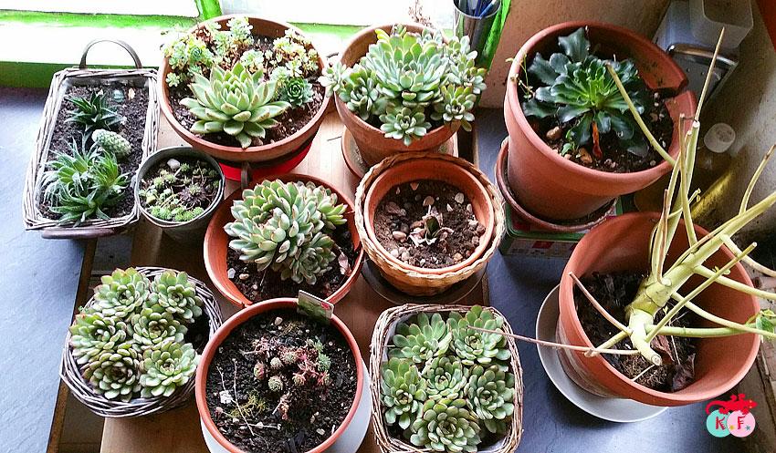 nursery-succulente-2