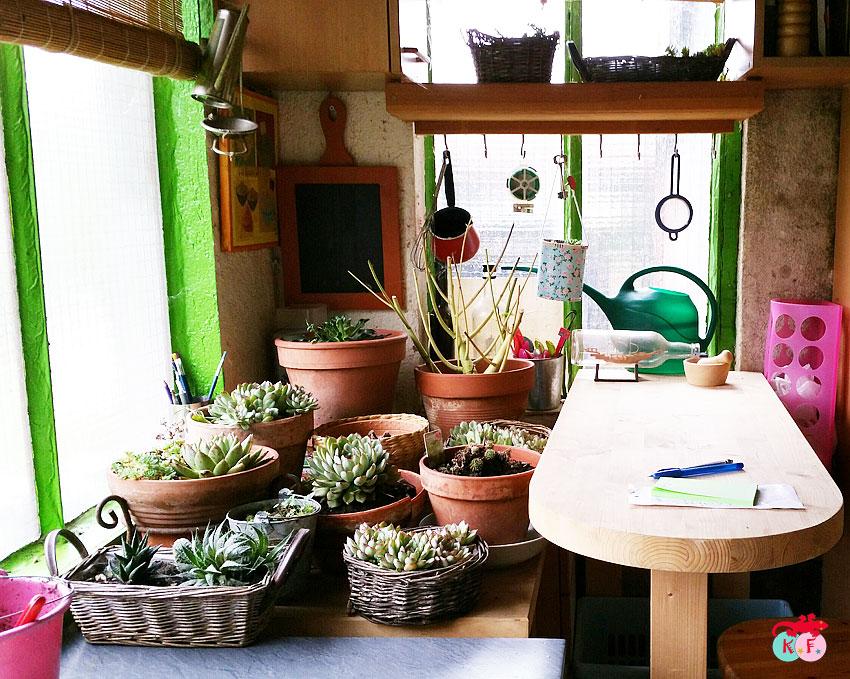 nursery-succulente