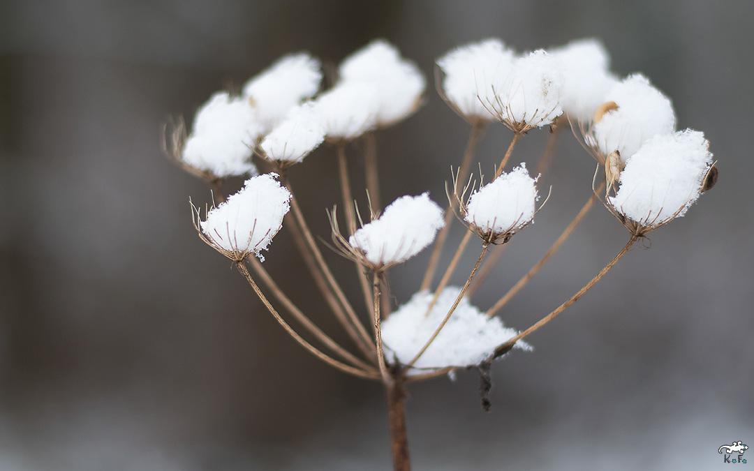 réservoir à neige et à petit bonheur au naturel pour l'année 2017