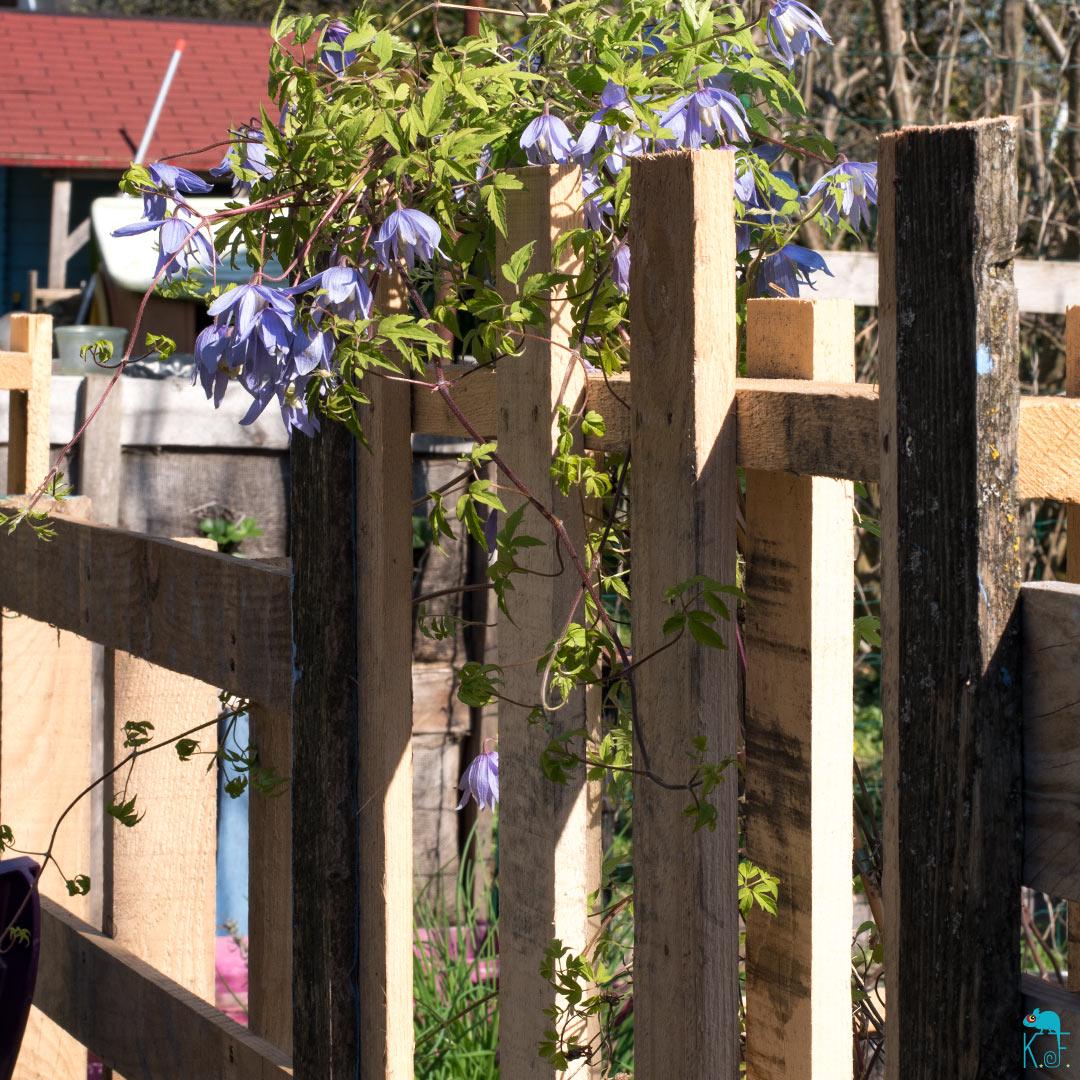 clôture en bois avec des palettes
